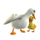 Pato con patito