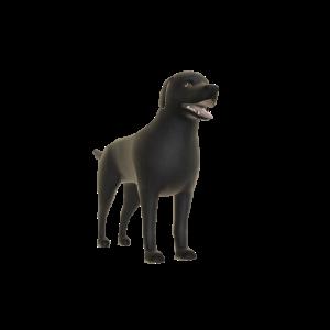 Dark Labrador - Buddy