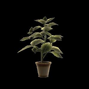 Green Herb Pot