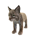 Lince rossa (peluche)