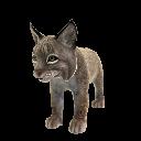 Lynx roux (peluche)