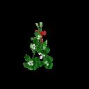 Mistletoe Animation
