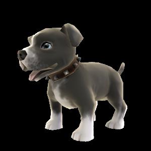 ピット ブルの子犬