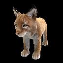 Lynx d'Espagne