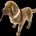 イヌとジョギング