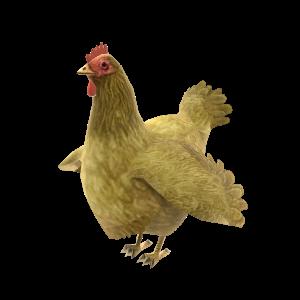 Kickable Chicken