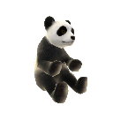 Niedźwiedź panda