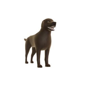 Brown Labrador - Buddy