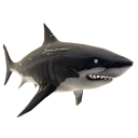 Zombie Great White Shark