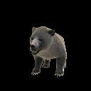 Bear Pet