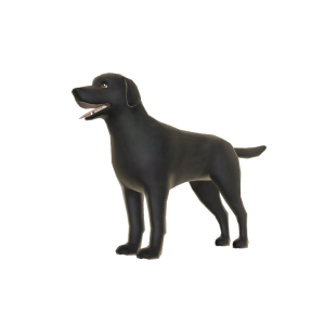 Dark Labrador - Pal