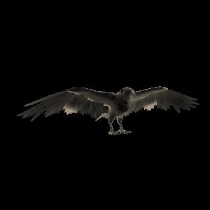 Cuervo Morrigan