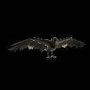 Krähe Morrigan