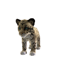 Bornean Clouded Leopard (Plush)